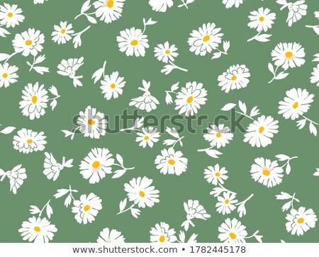 Daisy groene witte bloem voedsel natuur Stockfoto © Johny87