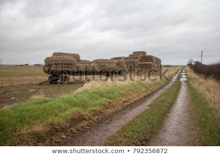 landbouwer · stro · boeren · veld · landschap - stockfoto © jenbray