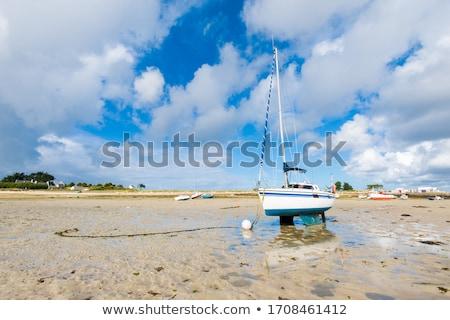 海藻 · ブラウン · 詳細 · 海岸 · スコットランド · 自然 - ストックフォト © latent