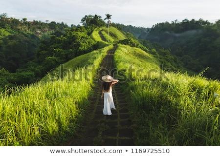 cennet · yaz · kır · çiçekleri · doğa · dağlar · bitkiler - stok fotoğraf © jeffmcgraw