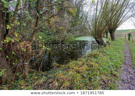 small clean water in holland nature stock photo © compuinfoto