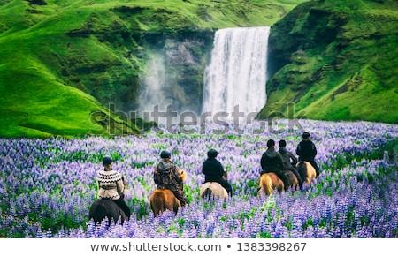 cascade · belle · paysage · Islande · Rainbow · attraction · touristique - photo stock © meinzahn