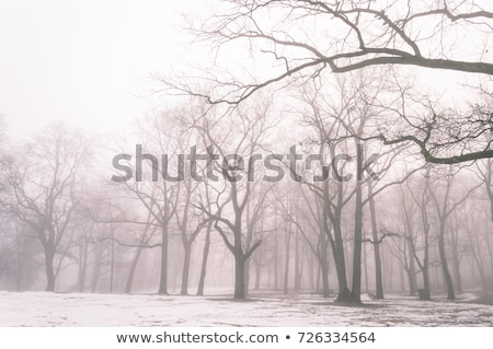 Eenzaam winter boom afbeelding landschap sneeuw Stockfoto © magann