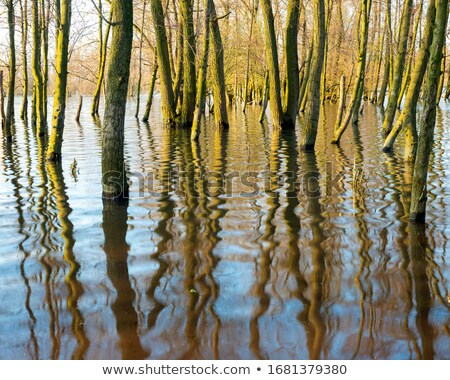 Flooded trees Stock photo © IvicaNS
