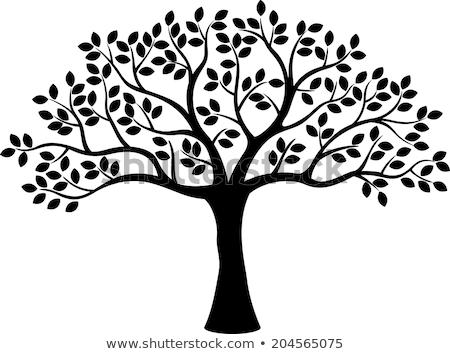 Fa spirál forma ágak szürke fű Stock fotó © coolgraphic