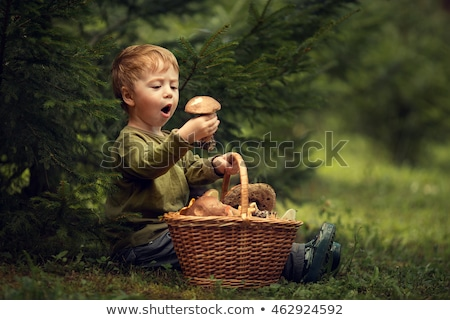 many little chanterelles in wood Stock photo © romvo