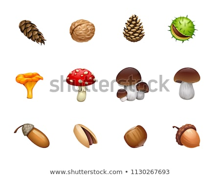 Stock photo: mushroom and pine cone