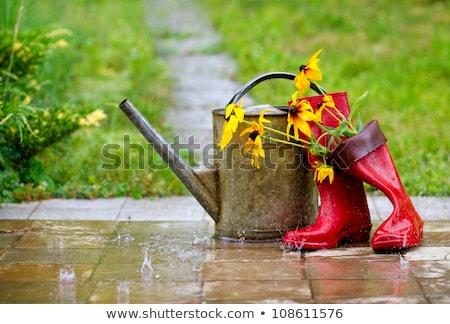rain boots and watering can Stock photo © adrenalina