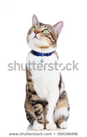 Ciekawy czarno białe kot w górę coś Zdjęcia stock © feedough