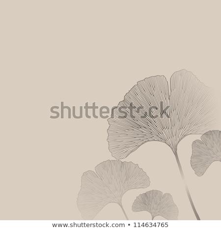 vektor · színes · virágmintás · keret · kézzel · rajzolt · levél - stock fotó © TrishaMcmillan