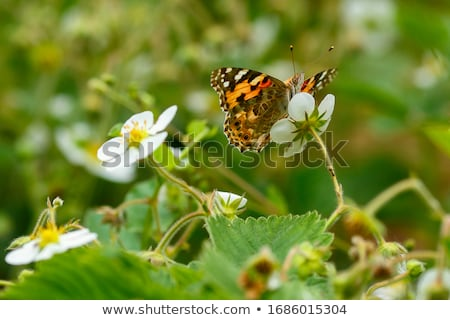Butterflies and other insects in garden Stock photo © bluering
