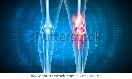 нормальный · совместный · анатомии · аннотация · синий · дизайна - Сток-фото © tefi