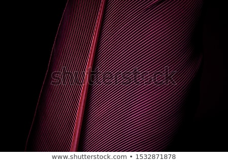 Stock photo: Black and purple abstract background, horizontal lines with shad