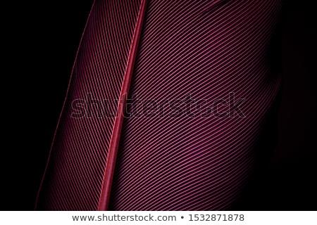 черный · Purple · аннотация · горизонтальный · линия · тень - Сток-фото © kurkalukas