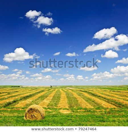 paglia · blu · nuvoloso · cielo · alimentare - foto d'archivio © pictureguy
