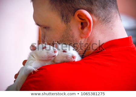 white rat sits on the shoulder stock photo © oleksandro