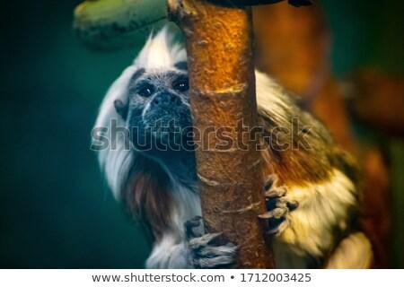 ツリー 森林 ボディ 夏 緑 ストックフォト © Walmor_