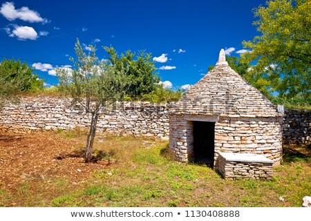 古い · オリーブの木 · 地中海 · オリーブ · フィールド · 準備 - ストックフォト © xbrchx