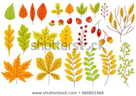 Szett ikonok ősz tölgy levelek izolált Stock fotó © konturvid