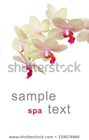 padrão · rosa · orquídeas · tropical · aquarela - foto stock © artjazz