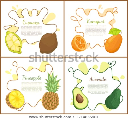 Cupuacu and Kumquat Posters Vector Illustration Stock photo © robuart