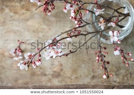 Hello karty Cherry Blossom wiosenny kwiat drzewo wiosną Zdjęcia stock © MarySan