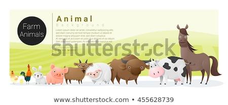 Farm animal on banner template Stock photo © bluering