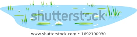 water lilies in a pond Stock photo © prill