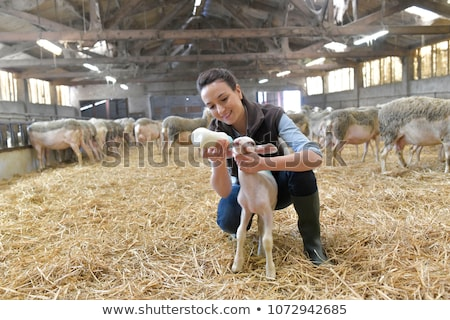 farming people woman with cow and man with sheep stock photo © robuart