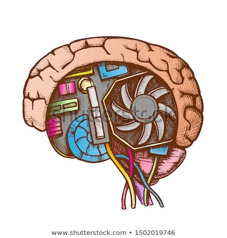 technológia · agy · oldalnézet · szín · vektor · mesterséges · intelligencia - stock fotó © pikepicture