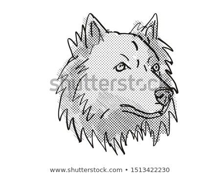 Chusky mixed breed Dog Breed Cartoon Retro Drawing Stock photo © patrimonio
