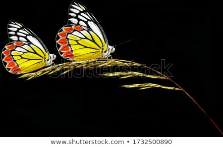 パターン 花 蝶 暗い ベクトル 手描き ストックフォト © Margolana