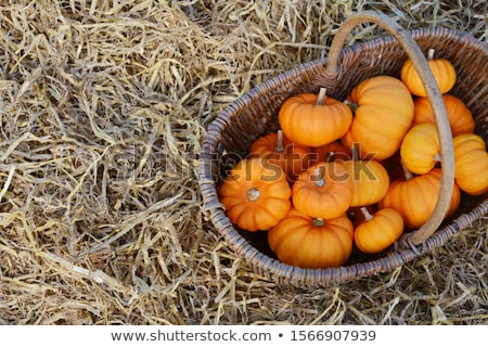 Naranja mini calabaza rústico cesta atención selectiva Foto stock © sarahdoow
