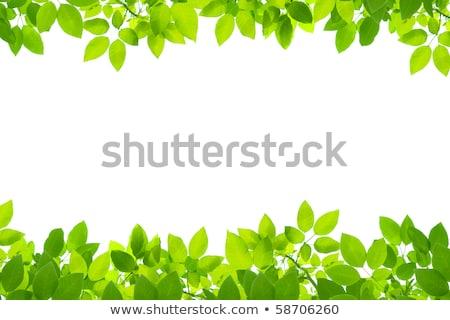 Vert printemps laisse jardin botanique nature Photo stock © Anneleven