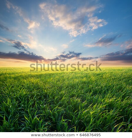 Kultiviert Land Bereich Frühling Zeit blauer Himmel Stock foto © simazoran