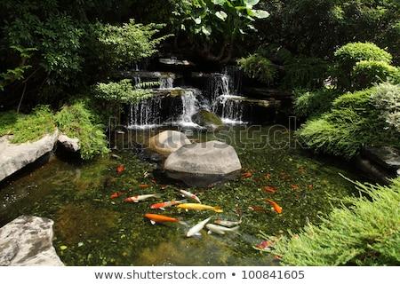 swimming fish in garden pond japanese carp stock photo © ansonstock
