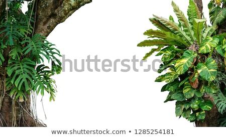 Regenwoud boomstam wijnstokken tropische australisch Stockfoto © kikkerdirk