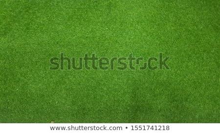 This is my grass! Stock photo © Alvinge