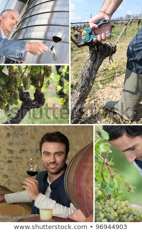 barrels, a vine shoot and wine makers Stock photo © photography33