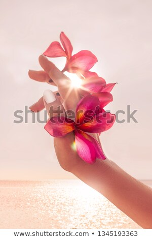 Woman hand with frangipani on white background stock photo © happydancing