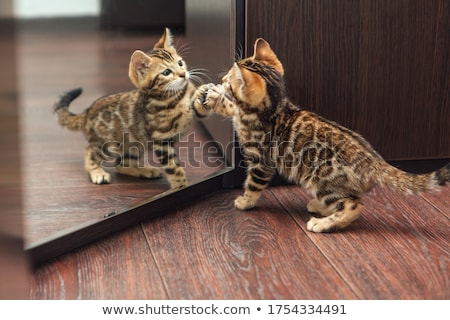 Kitten looks Stock photo © Andriy-Solovyov