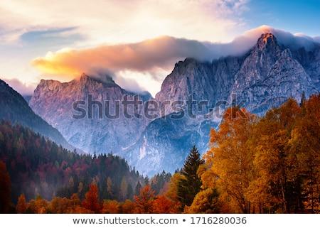 Düşmek manzara huş ağacı ağaçlar saman rulo Stok fotoğraf © guffoto