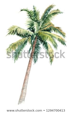Kókuszpálma fa tengerpart nap nyár pálma Stock fotó © haraldmuc