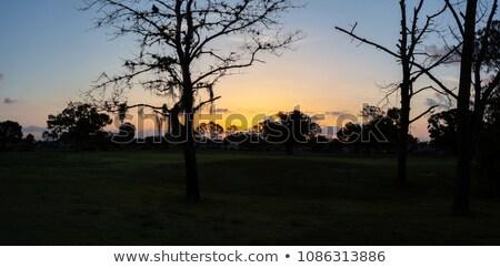 ストックフォト: ゴルフ · 緑 · 冬 · 黄色 · 日没 · 空