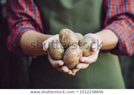 farmer holding potato stock photo © stevanovicigor