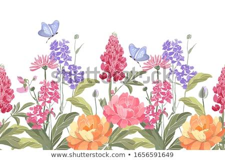 Orange and Pink Lupine Flowers (Lupinus) Stock photo © tainasohlman