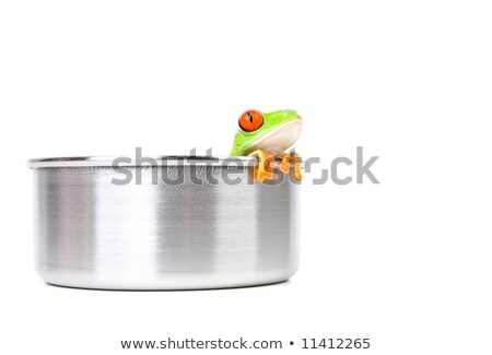 frog in a pot isolated Stock photo © alptraum
