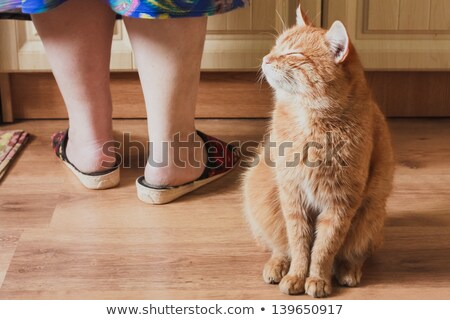Stock photo: Red Cat Sitting Near Female Foots