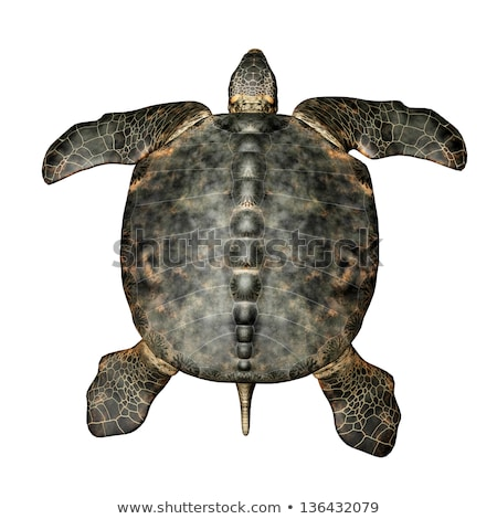 гигант морем черепахи компьютер генерируется 3d иллюстрации Сток-фото © MIRO3D