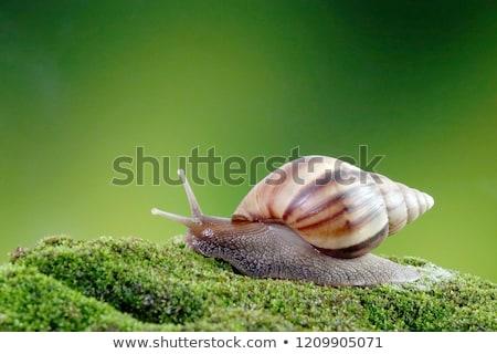 улитки · изолированный · белый · природы · скорости · животные - Сток-фото © nito